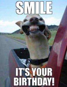 Hund smiler